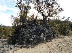 tumbuhan dan batu pasar setan pendakian gunung lawu dari cetho