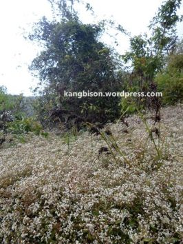 tumbuhan dan bunga pos 1 pendakian gunung lawu dari cetho