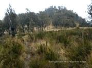 tumuhan dan bukit bukit sabana pendakian gunung lawu dari cetho