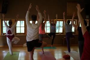 Der Baum beim Yogawochenende im Wandelhaus