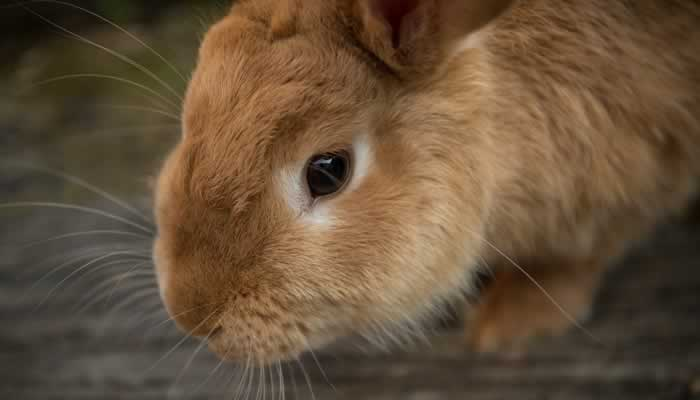 Kaninchen-Durchfall