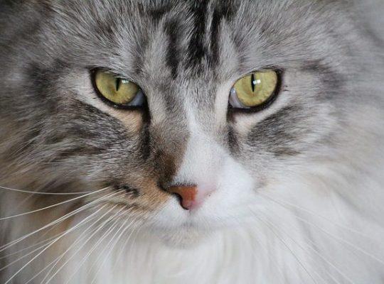 Macskás videó