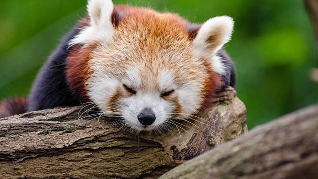 眠れない夜のための6つの心得
