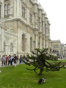 2012 ISTANBUL DSCN6234