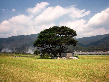 木陰の家1