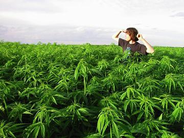 legalize-marijuana-california-environment