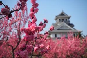 豊公園 梅と長浜城