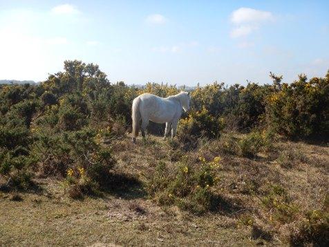 One last Pony