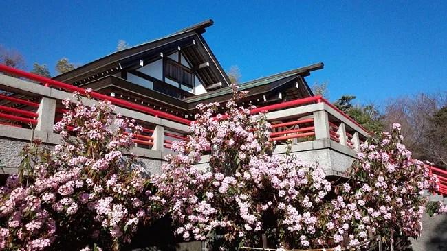 愛犬連れでお詣りできる伊豆高原の神祇大社