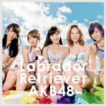 Akb48 Labrador Retriever A Limited