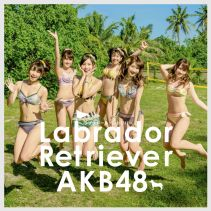 Akb48 Labrador Retriever K Limited