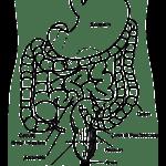 横行結腸下垂