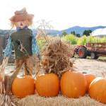 Faulkner's Ranch Hosts Pups & Pumpkins Nov. 1