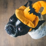 Three Dog Bakery Growl-o-Ween Paw-ties