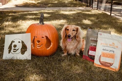 Dog-Friendly Halloween Events in Kansas City - dog sitting by a jack-o-lantern