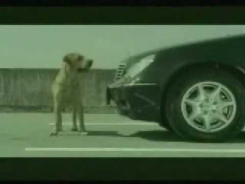 A Dog's Suicide Attempt (Bridgestone Commercial)