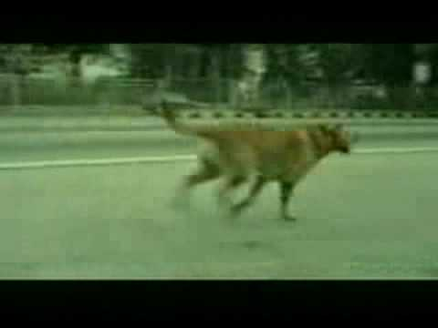 Bridgestone Tire Commercial - Dog Suicide