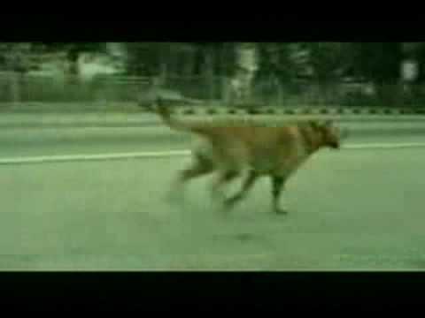 Bridgestone Tire Commercial - Dog Suicide