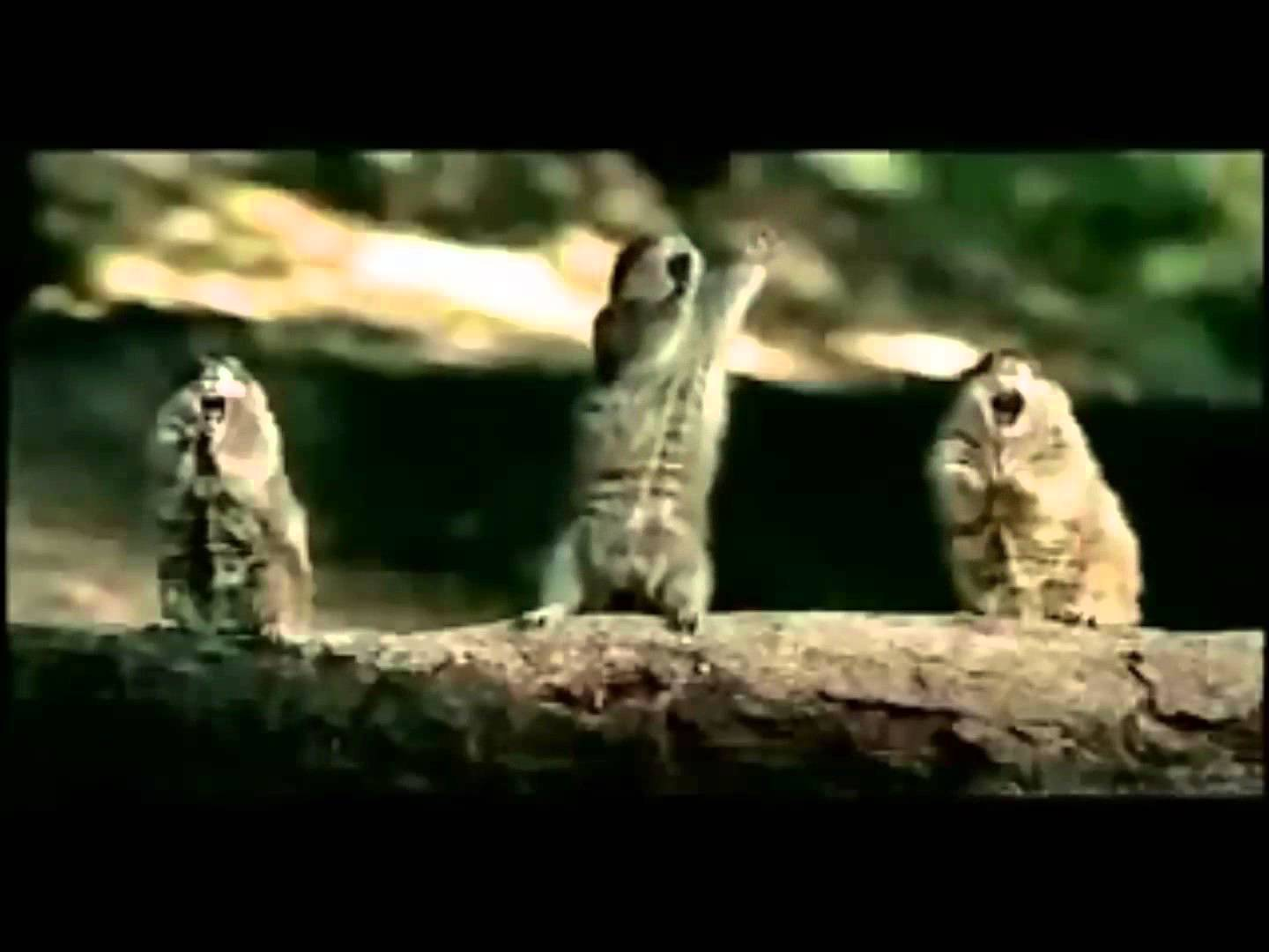 Squirrelly Bridgestone Tire Commercial HD