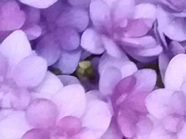 P10 lite flower 1 8M zoom
