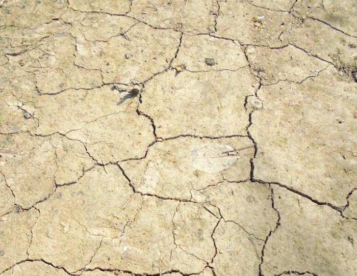 地面が乾燥して割れているイメージ画像