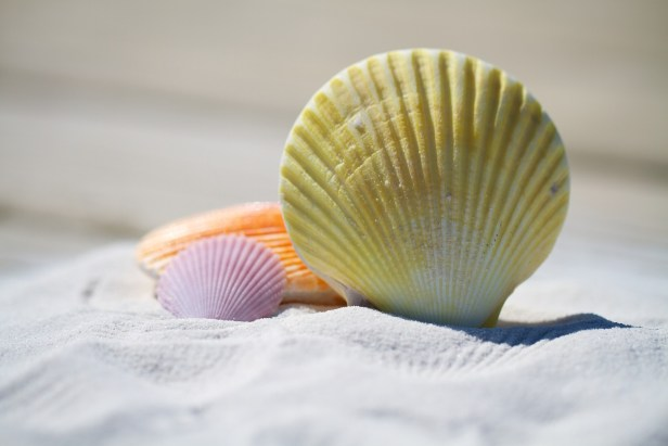 shells-792912_1920.jpg