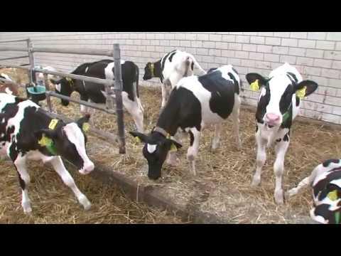 先進的農業機械 ─ 德國乳牛自動化作業