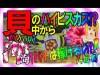 【CRAスーパー海物語IN沖縄3甘】 ◆しらほしの1パチは稼げるのか?74日目◆この台の魅力は出玉力!?16Rは一撃1900玉…貝の中からハイビスカスプレミア!?