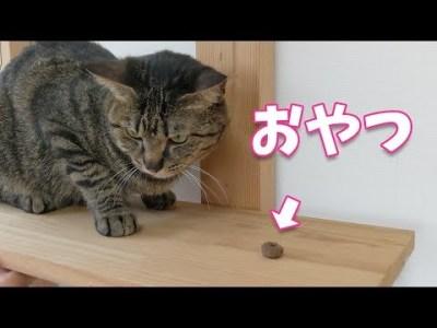 高所恐怖症の克服訓練w【すずとコテツ】