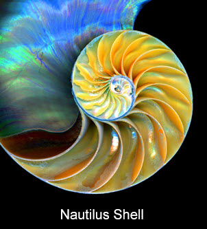 biomimicry impeller vortex