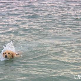 Mascota en el mar