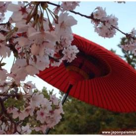 """""""Sakura"""" Haijima Sea Paradise Acuario - Yokohama - Kanagawa Fotografía: Cristina Bayés de Onishi"""
