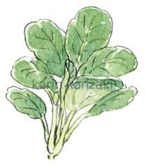 野菜 イラスト 水彩画