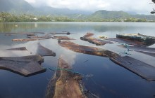 Cut slabs of the monkey pod tree sit and cure in He'eia fishpond for a few months before being reshaped into poi boards. The slabs must cure so that insects and other bacteria are killed off before the board is ready to be used - Darryl Kaneyuki