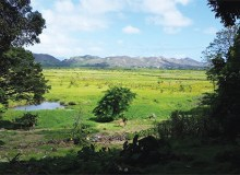 Kawainui Marsh in Kailua is the largest wetland in the state of Hawai'i - Courtesy of Ian Jenss