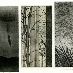 Fall・秋 Etching・Aquatint・Mezzotint・Spit bite・Gampi-Paper(Mino) エッチング・アクアチント・メゾチント・スピットバイト・雁皮刷り・美濃和紙 image size H10.8cmxW11.8cm ed.30 2011