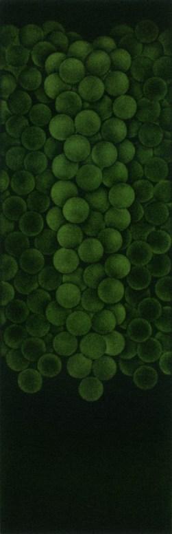 Three bunches of green grapes・3房の緑の葡萄 Mezzotint メゾチント image size H31.5cmxW10.2cm ed.30 2011