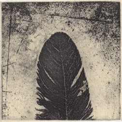 Feather 02・羽根 02 Etching・Gampi-Paper(Mino)Gold+Silver leaf エッチング・雁皮刷り・美濃和紙・水金箔 image size H5.7cmxW5.7cm ed.50 2011