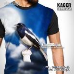 Kacer Mania, Kaos BURUNG KACER, Kaos3D, Kaos Gambar BURUNG, Kaos KLUB BURUNG KACER
