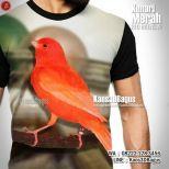 Red Intensive, Kaos3D, Kenari Merah, Kaos BURUNG, Kaos KICAU MANIA, Kaos3DBagus