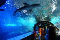 Newport Aquarium