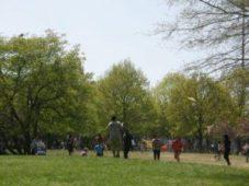 Vliegeren in park