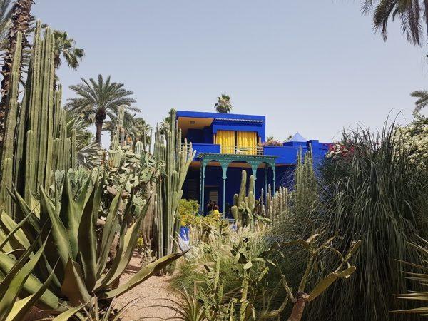 majorelle tuin cactus marrakesh