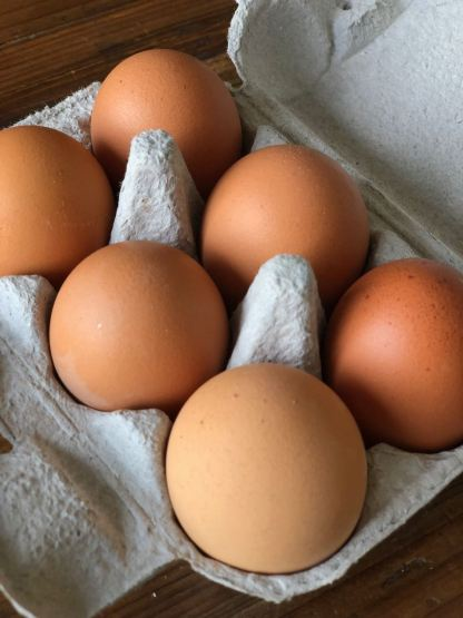 Eggs by the Egg Shed