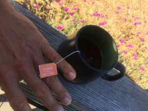 Gabe Kapler and his rooibos tea