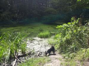 A swamp in Århus