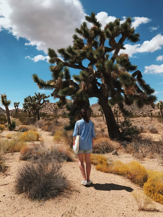 A girl standing staring at a large lonesome Joshua Tree