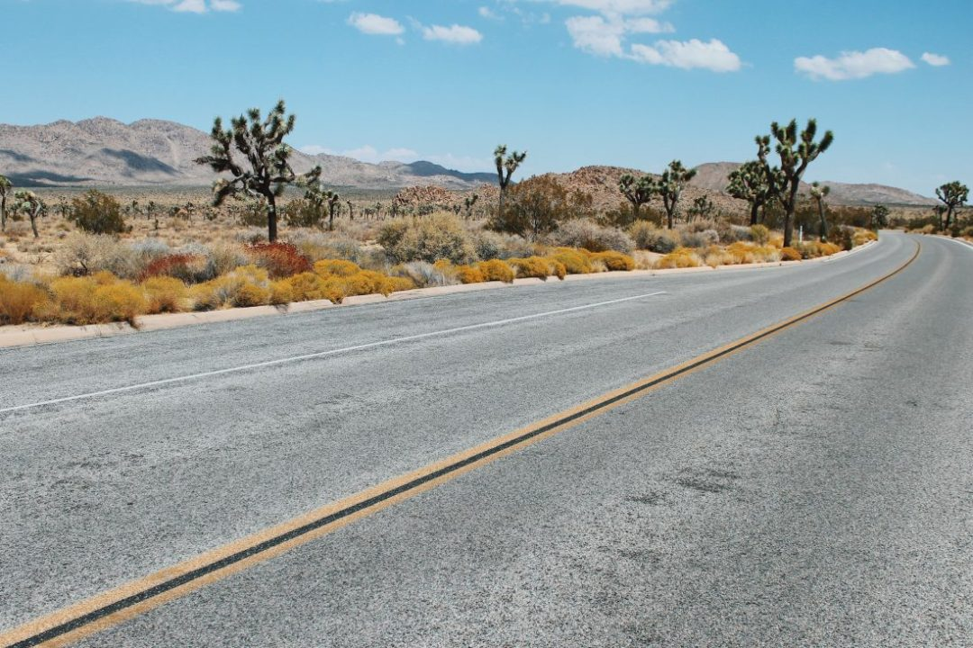 The lonesome Joshua Tree - my first visit to the U.S desert