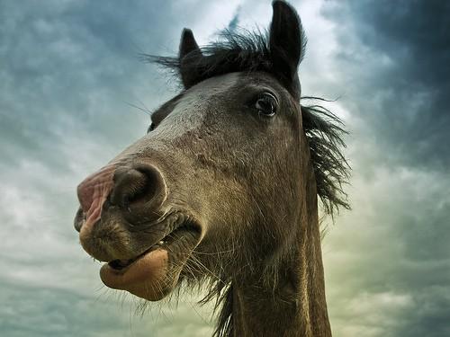 7543479930_2915b57c73_pony