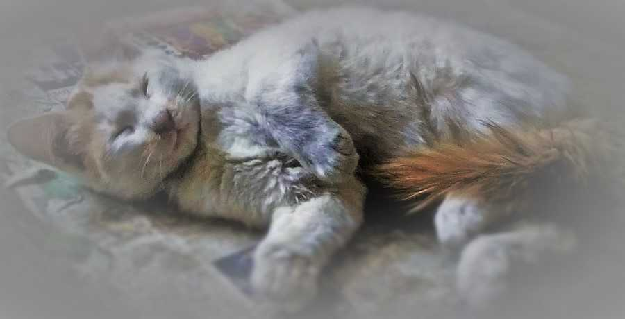 Is Clumping Cat Litter Bad For Cats